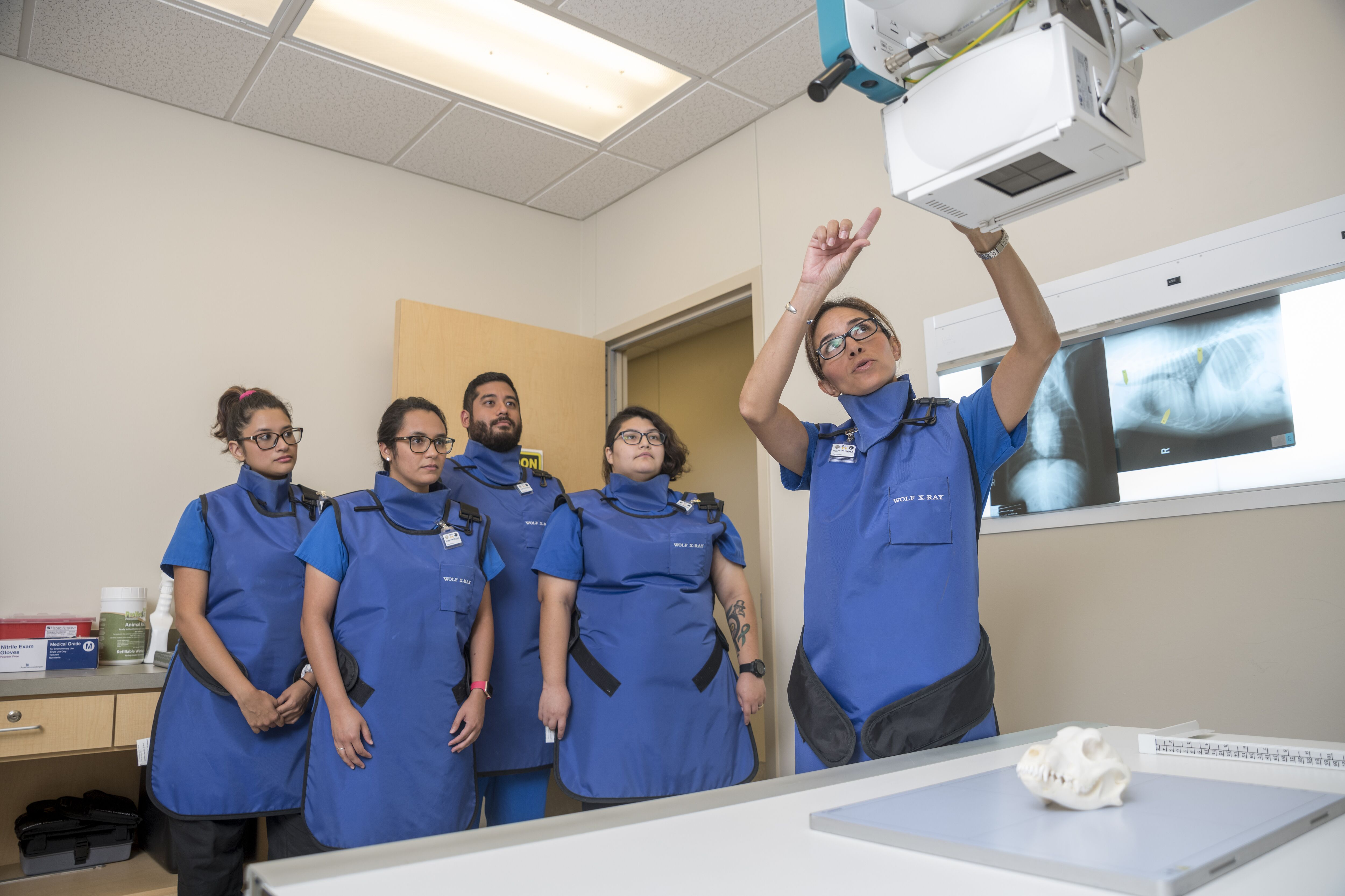 Veterinary technology students learn about x-ray technology.